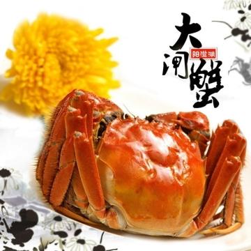 正宗阳澄湖海鲜大闸蟹螃蟹599型公蟹155-170克/4只母蟹105-120克/4只