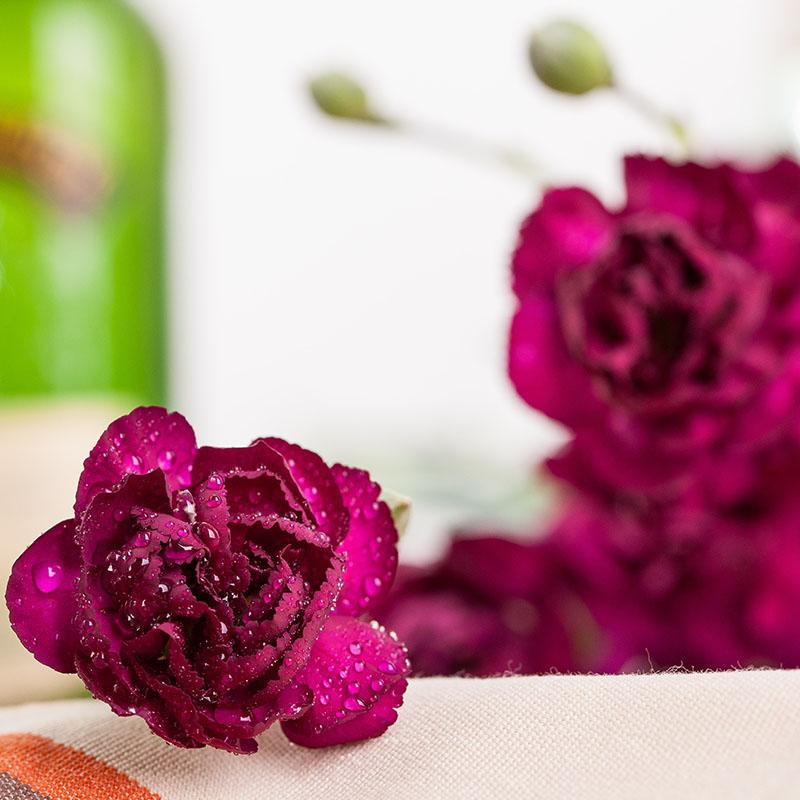 【全国包邮】康乃馨 香石竹 深紫 20支/扎 鲜切花