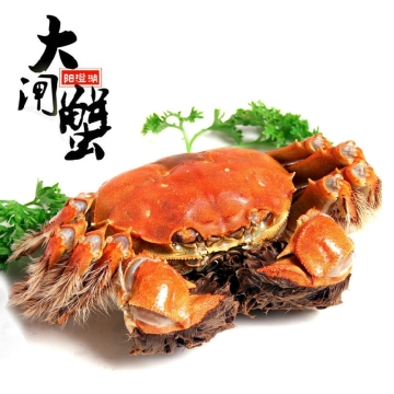 正宗阳澄湖海鲜大闸蟹螃蟹2099型 公蟹230-245克/4只母蟹155-165克/4只