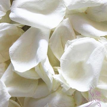 玫瑰花浴 新鲜白色玫瑰花瓣250克