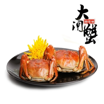 正宗阳澄湖大闸蟹螃蟹489型公蟹155-170克/3只母蟹105-120克/3只